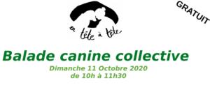 Balade Canine Collective!